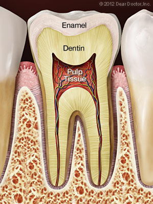 healthy-tooth (1)